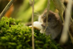 nature-animal-mouse-beautiful